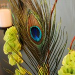 Peacock Feather Party Decor